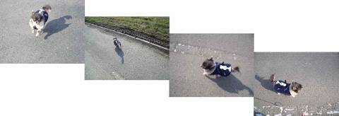 遠賀川  (480x164)