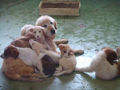 千葉県動物愛護センターにて