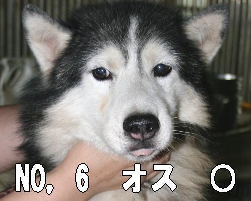 20120726205935c88.jpg
