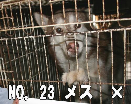 201207262102500bc.jpg