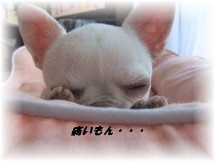 2011_09140717.jpg