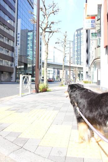 日本橋小舟町でござる