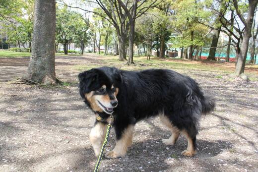 清澄公園に来ましたのね!