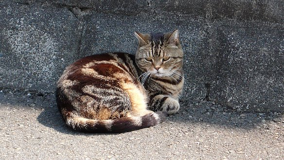 陽だまりと猫