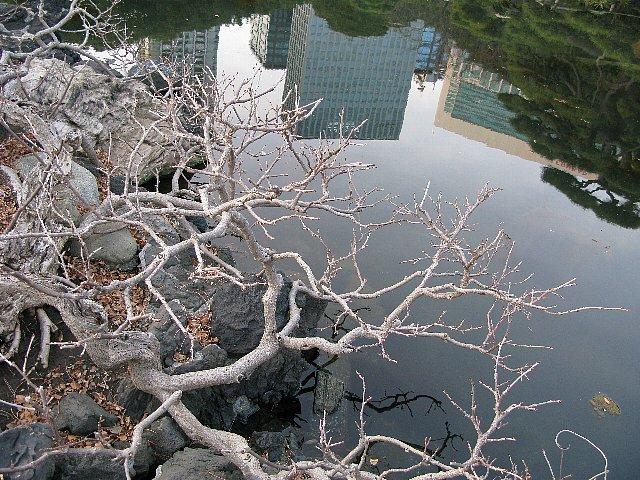 2008.01 浜離宮 潮入の池に汐留