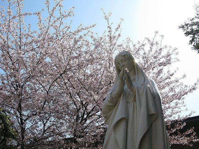 カトリック山手教会のマリアとさくら