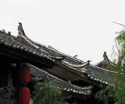 麗江古城 屋根 の鳥