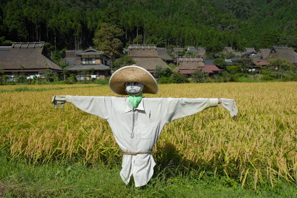 蕎麦畑05