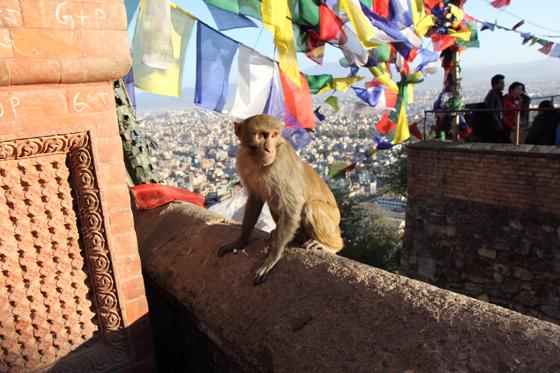 nepal003.jpg