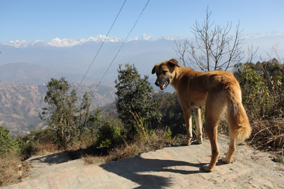 nepal009.jpg