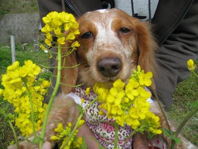 菜の花と笑ちゃん