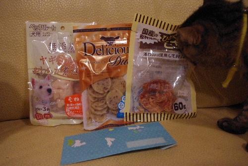 湘南犬親会20115
