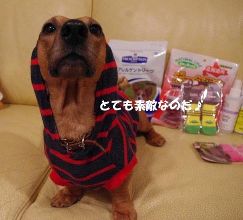 湘南犬親会20114