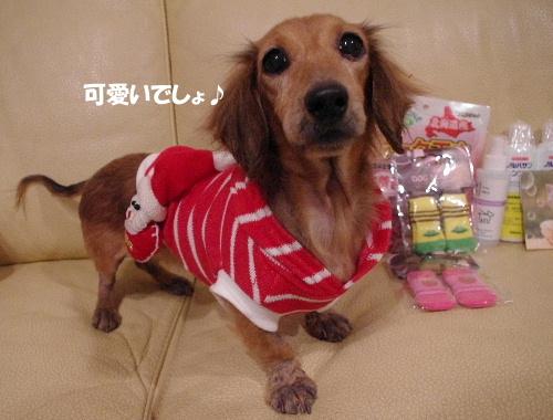湘南犬親会20111