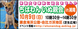 shounan20111009_320x120.jpg