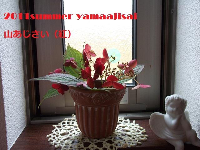 yamaajisai.jpg