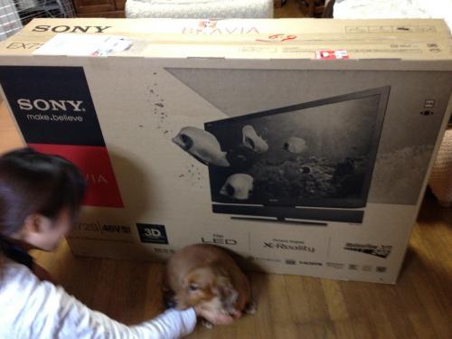 TV (1)