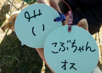 いぬ5_convert_20131201165324
