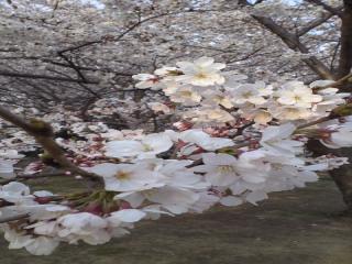 春_convert_20120420101828