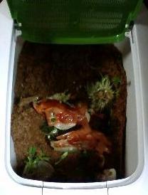 カエルくんの初めてのご飯