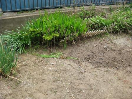 植える前の庭!