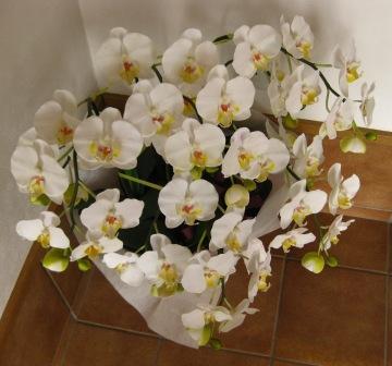 店内にはお花がたくさん!