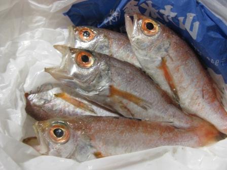 高級魚ノドグロ