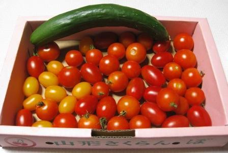 ミニトマト大量収穫