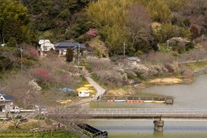 佐久間ダム俯瞰 橋と池と梅