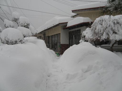 yuki2146.jpg