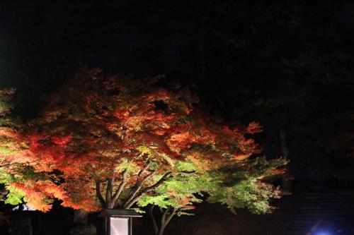 鶴ヶ城 11 5 002
