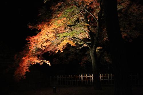 鶴ヶ城 11 5 003
