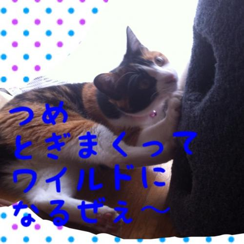 IMG_1679_convert_20120927093026.jpg