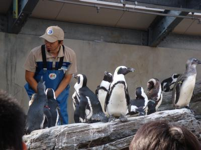 『サンシャイン水族館』ペンギンビーチ
