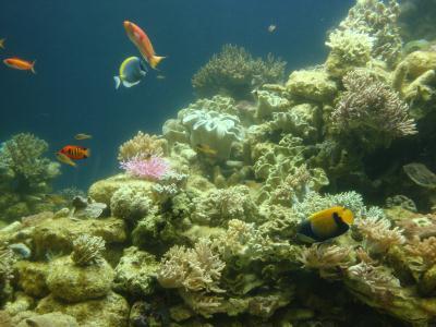 池袋 『サンシャイン水族館』2011.8.14