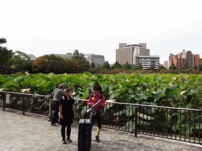 上野・不忍池(蓮池)