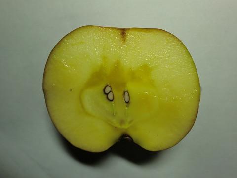 リンゴの味は蜜の味