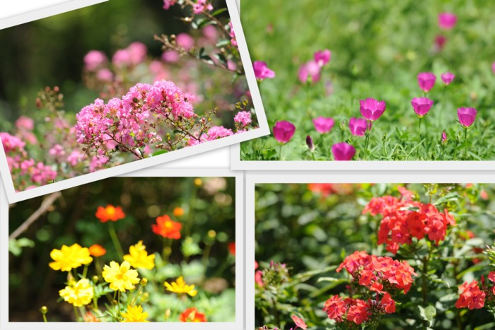 1ボーダーガーデンの花たち