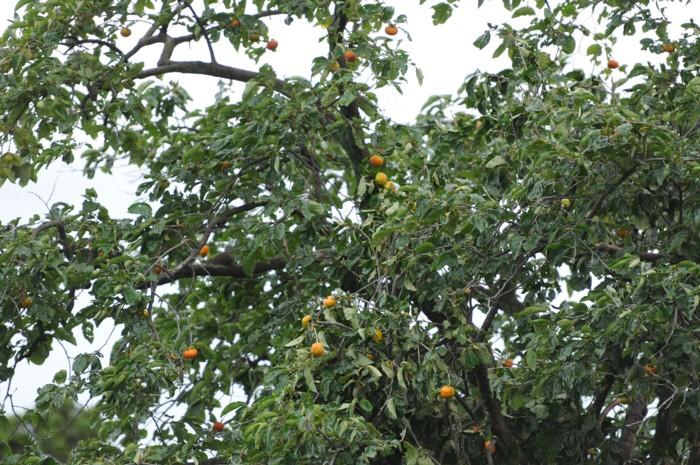 4500川越一の柿木~