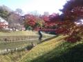 201411竜田川5