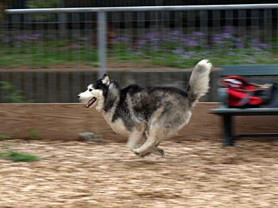 飛行犬ポトフ