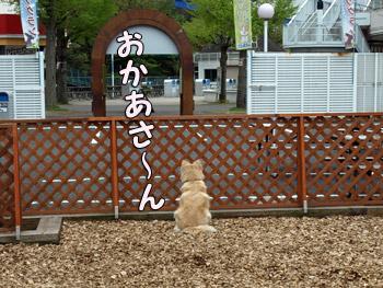 忠犬フィーアちゃん