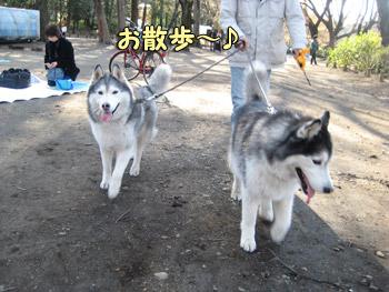 井の頭公園散歩