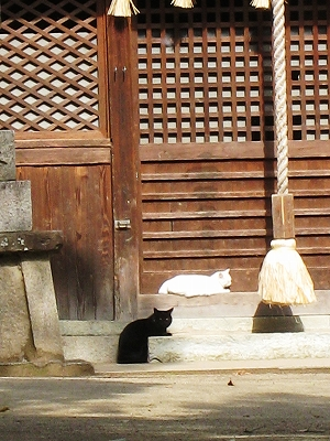ネコのひなたぼっこ