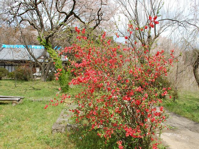 桜川神社5