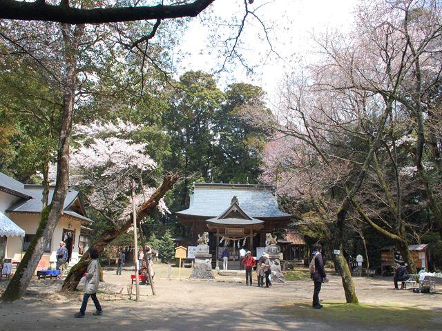 桜川神社2