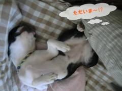 2011_0918_152637-CIMG6770.jpg
