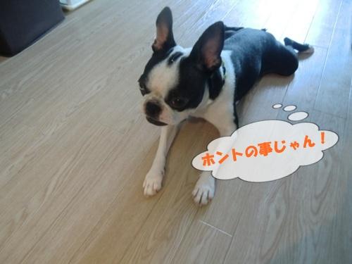 2011_0921_124843-CIMG6785.jpg