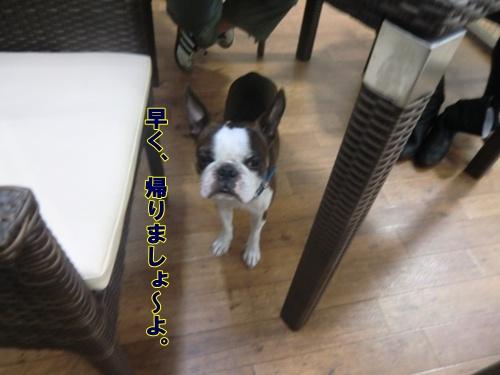 2011_0921_160053-CIMG6808.jpg
