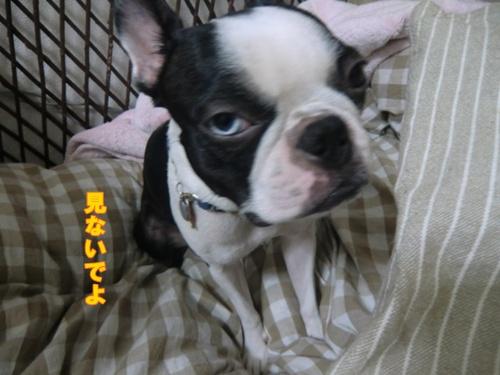 2011_0927_232226-CIMG6831.jpg